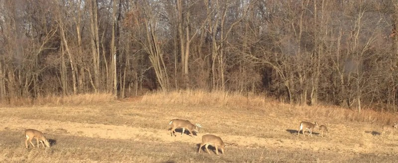 On a good day, you may catch a mature buck venturing out to mix it up with a group of does.