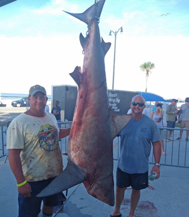David Rogers with Bull Shark. (Photo courtesy MDMR)