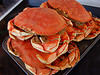 dungeness_crab