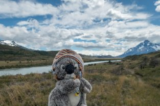 Dans la plaine du parc des Torres del Paine