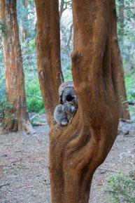 Sur mon Arrayan, arbre de couleur cannelle