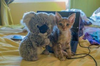 """Avec mon pote le """"mini-chat"""""""