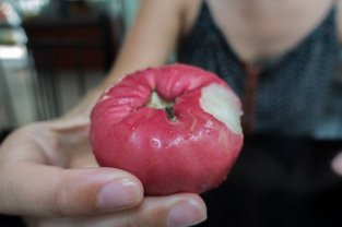 Fruit du jamboisier