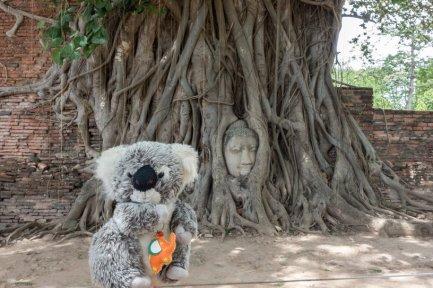 A Ayutthaya, avec mon pote le bouddha qui s'est coincé la tête dans le banian