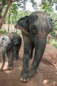 Avec mes 2 nouveaux amis éléphants