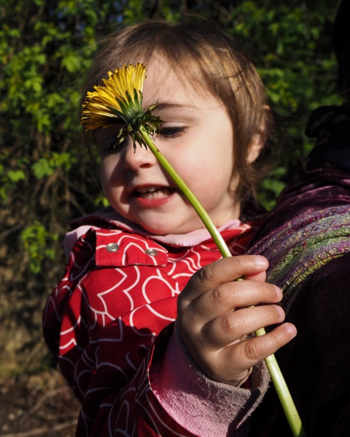 Child holding a dandelion in a handwoven wrap