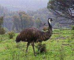 Emu 34