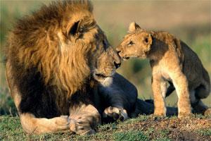 Znaczenie snu lew