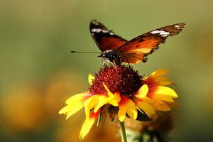 Znaczenie snu motyl