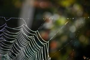 Znaczenie snu pajęczyna