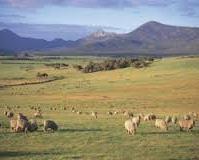 Pastwisko 14