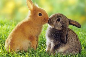 Sen o króliku