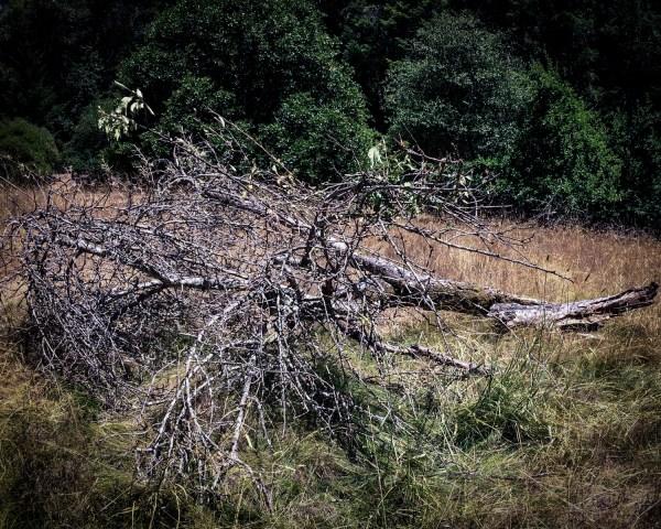tree-105