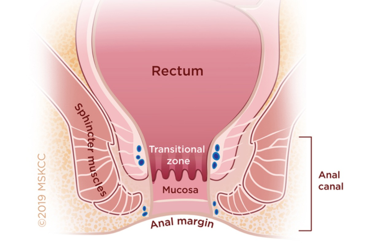 hight resolution of anal canal diagram