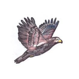 eagleadolecent