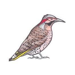 northernflicker