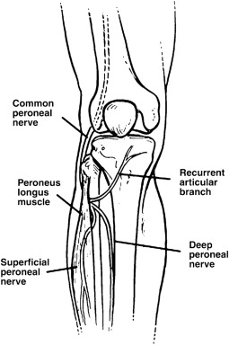 The anterior recurrent peroneal nerve entrapment syndrome