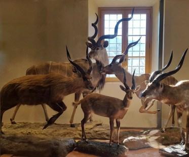 Galleria dei mammiferi (foto Patrizia Scaglia)