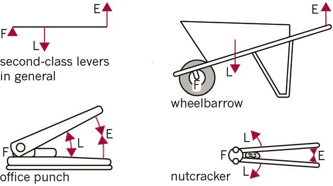drawing force diagrams worksheet further body diagram