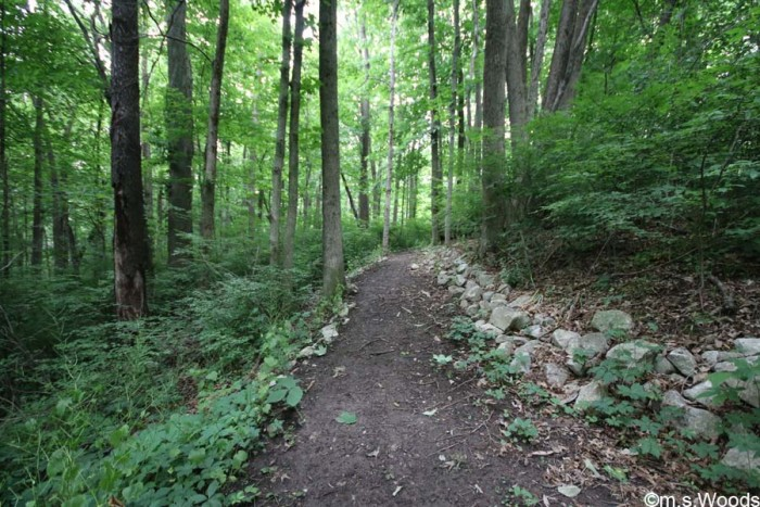 blanton-woods-walking-trail