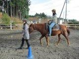 富士の麓で馬とのふれあい&乗馬体験