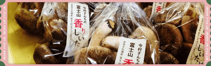富士山の伏流水で育てた無農薬【今村さんちの香りしいたけ】狩り&試食(お土産つき)