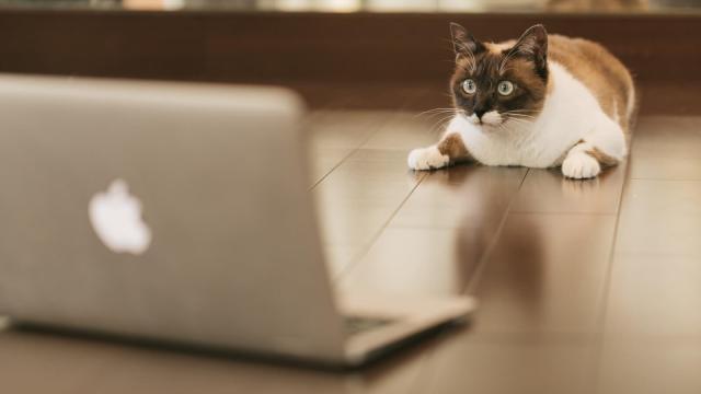 戸惑うネコ