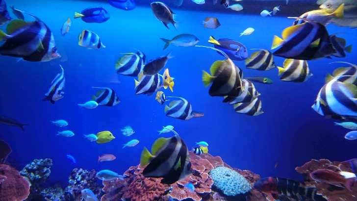 南の島に住んでいそうな魚たち