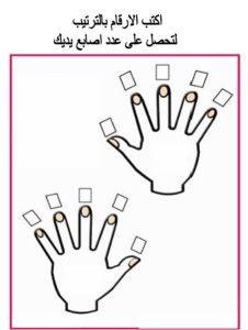 اوراق عمل وحدة الأيدي