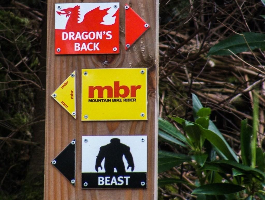 Coed-y-brenin MTB Centre - Snowdonia