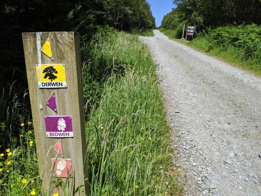 Bedwen a Derwen- Beddgelert Forest MTB Trail