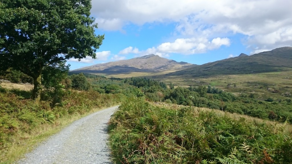 Mountain Biking in the Beddgelert Forest