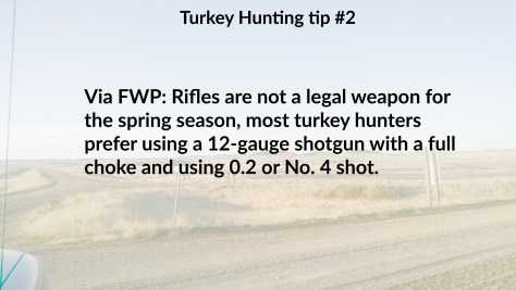 Turkey tip 2