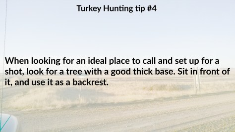 Turkey tip 4.jpg