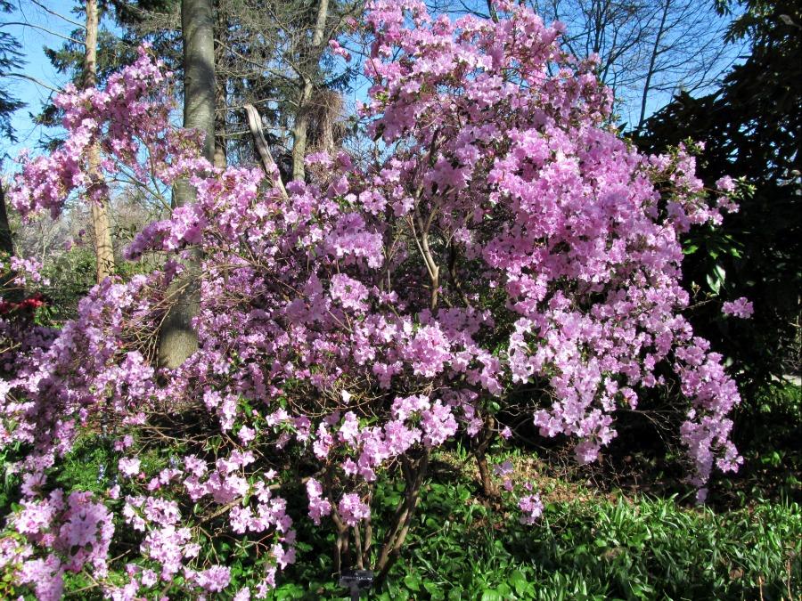 Весна в Виктории