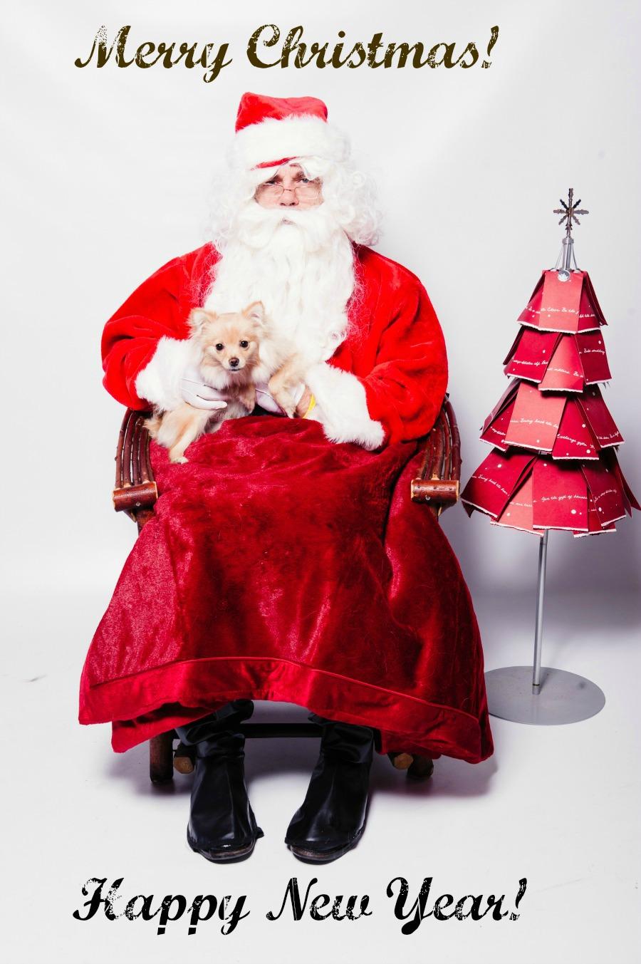фото собаки с Санта Клаусом