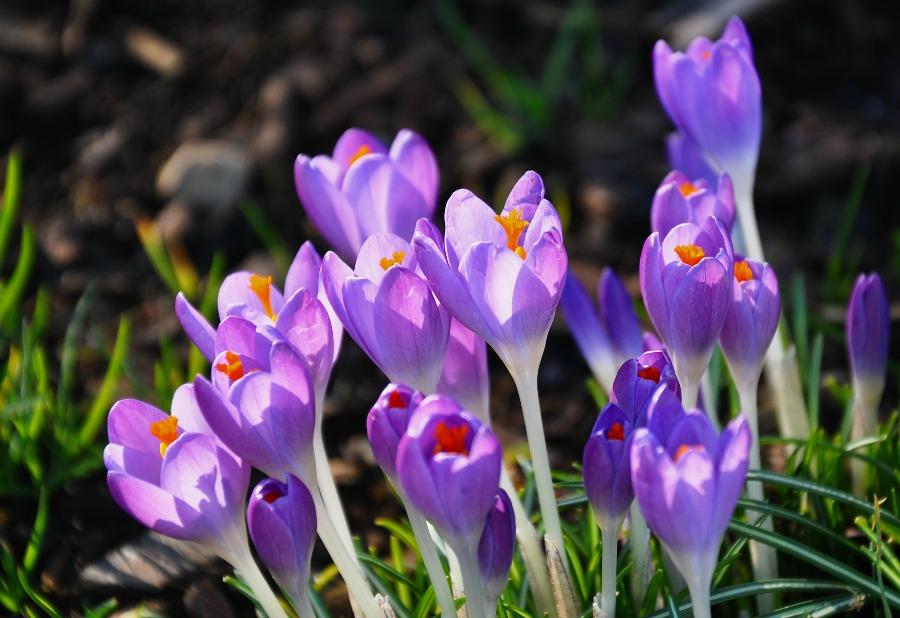 весна на острове Ванкувер