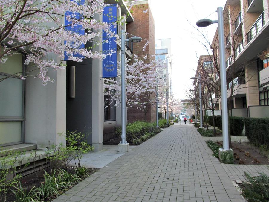олимпийская деревня весной