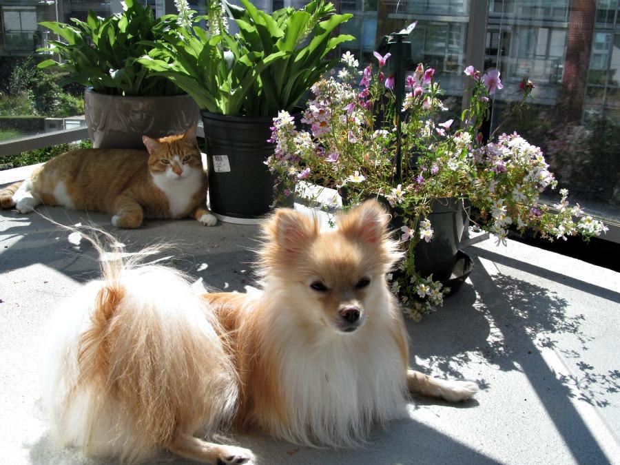 домашние животные в Канаде