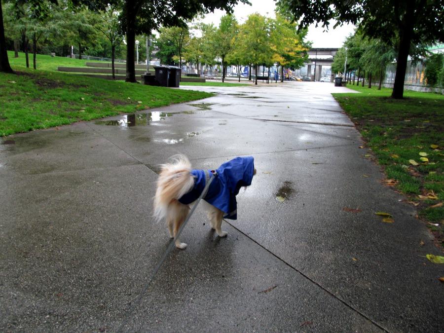 сентябрь в Ванкувере