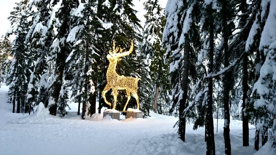 рождественские огни на горе