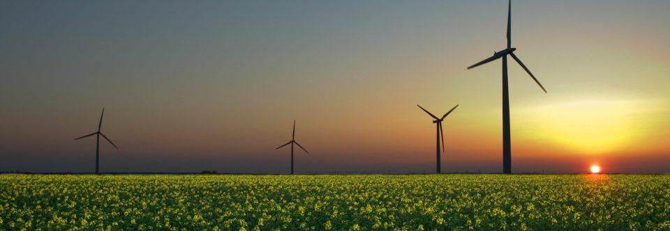Renewable Energy Is The Real Job Creator