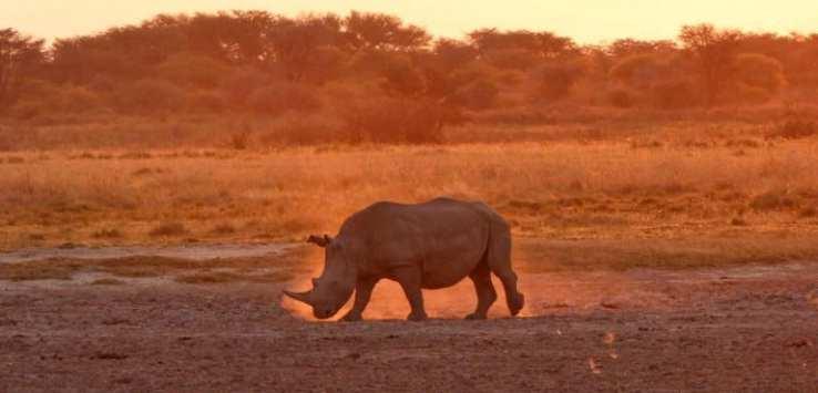 Botswana - MyTravelTricks.com