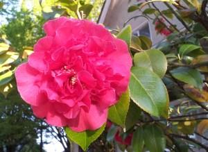 Red Beltane flower
