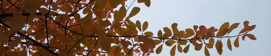 cropped-Late-Fall-Header.jpg