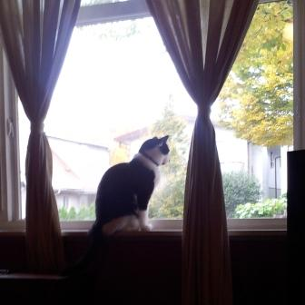 Zoey in the window