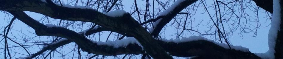 Winter-Header.jpg