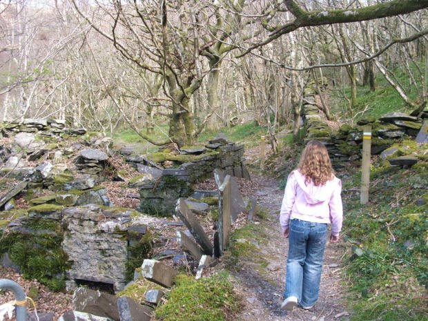Nature Trail / Llwybr Natur - Padarn Country Park Walk