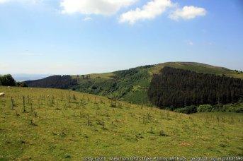 Moel Arthur and Penycloddiau Walk on Offa's Dyke