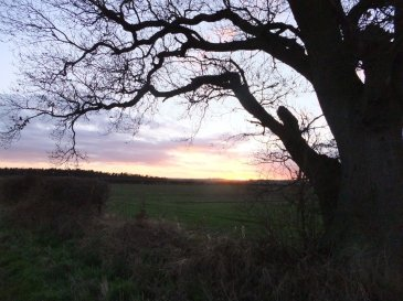 wolds_121_960
